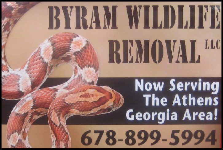 Athens Clarke Wildlife Removal