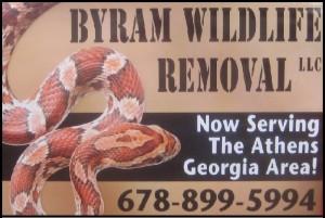 Athens Clarke Wildlife Removal