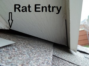 Rat Removal Proofing And Control National Wildlife Removal