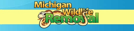 Michigan Wildlife Removal