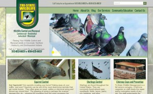 Wildlife Removal Cincinnati