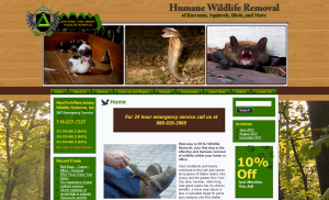 New Jersey Wildlife Removal